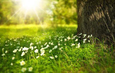 Blühstreifenpflege im Konkordia Park @ Konkorida Park